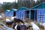 Unsere neue Ziegenunterkunft ist nun endgültig fertiggestellt